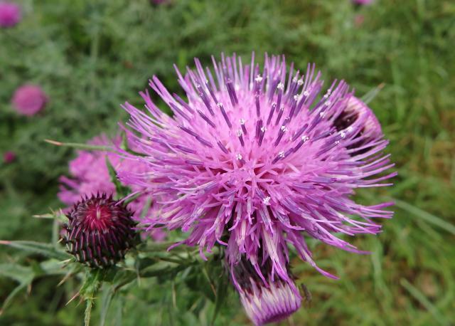 アップで見ると頭花は豪華で美しい