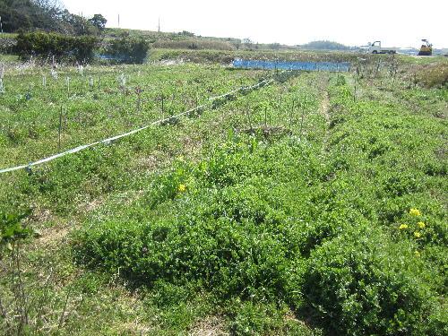 農園 (1)