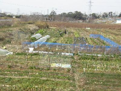 農園2月 (1)