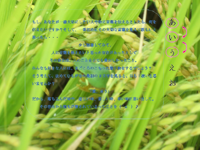IMG_0478 - コピー (2)