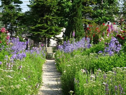 宿根草の道