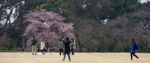 桜の季節が始まっていました