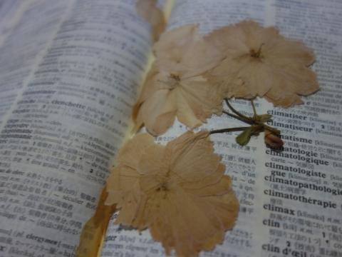 桜の花が消える前に