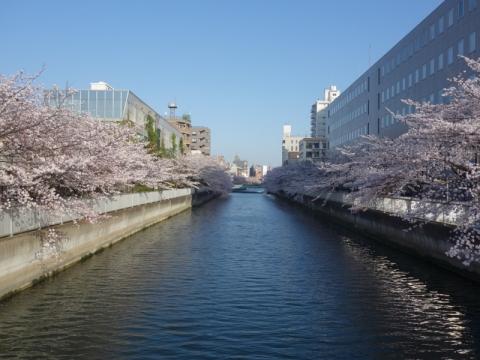 桜前線を感じます