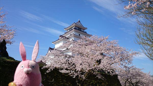 鶴ヶ城と桜1