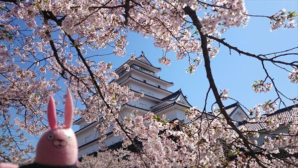 鶴ヶ城と桜2