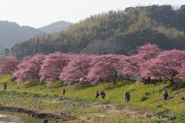 みなみの 桜並木