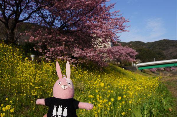 みなみの 桜と菜の花