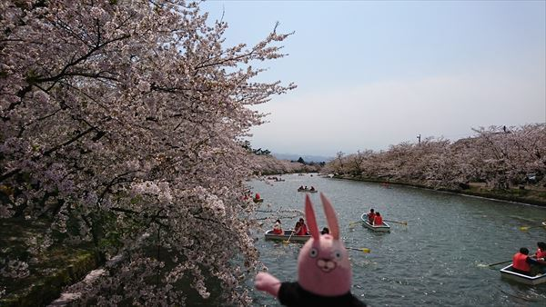 西濠の桜1