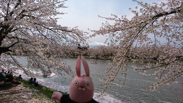 桜と岩木山1