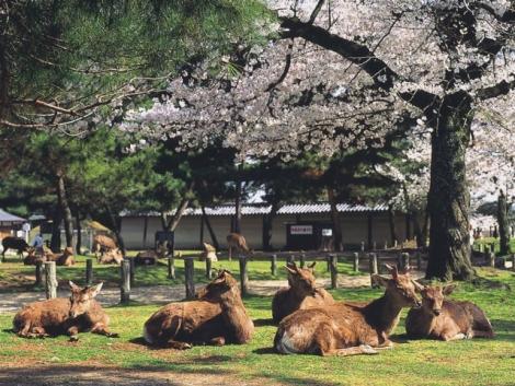 奈良観光協会