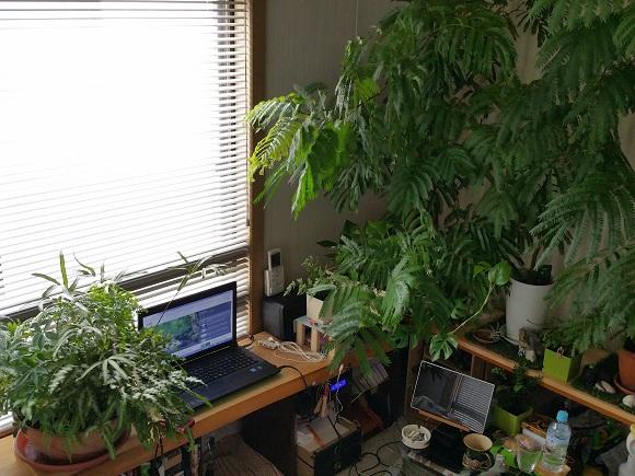 森の様な部屋2