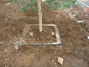 上尾酸素管植栽根