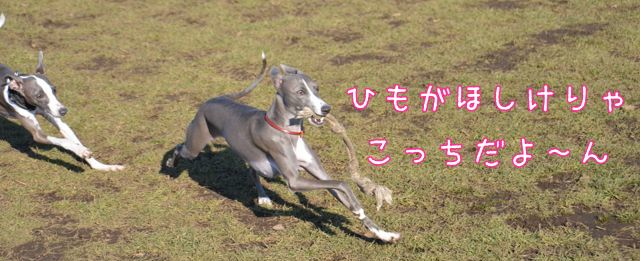 15DSC_6991.jpg