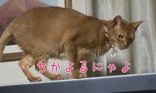 3IMG_8417.jpg