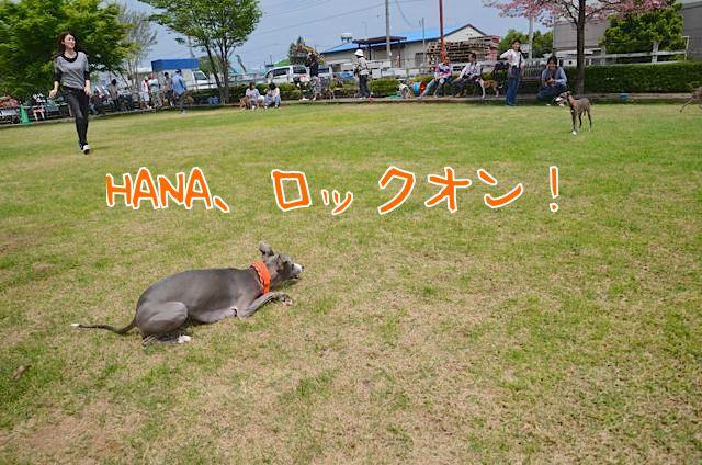 DSC_2987.jpg