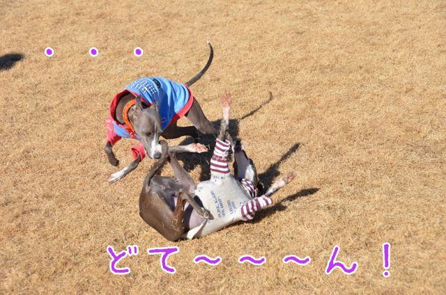 DSC_7791.jpg