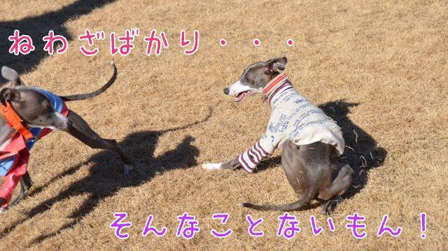 DSC_7792.jpg