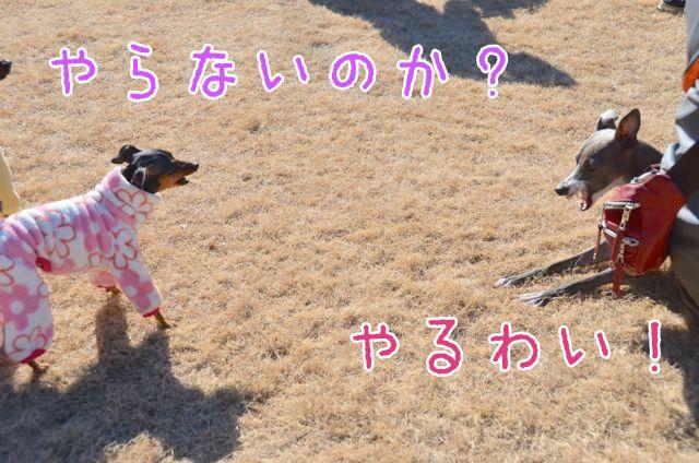 DSC_7901.jpg