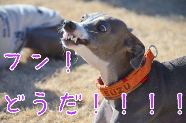 DSC_7978.jpg