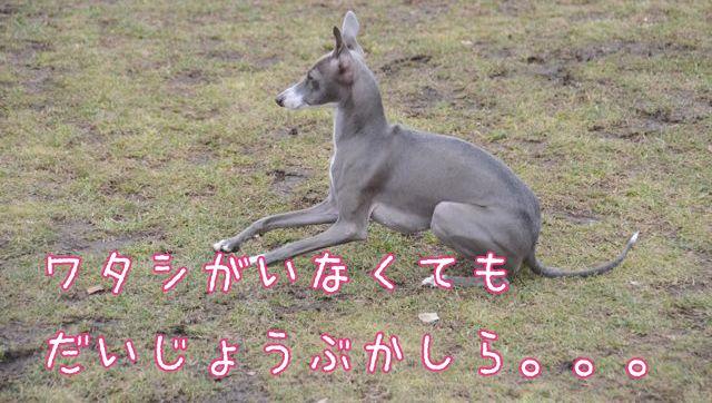 DSC_8015.jpg