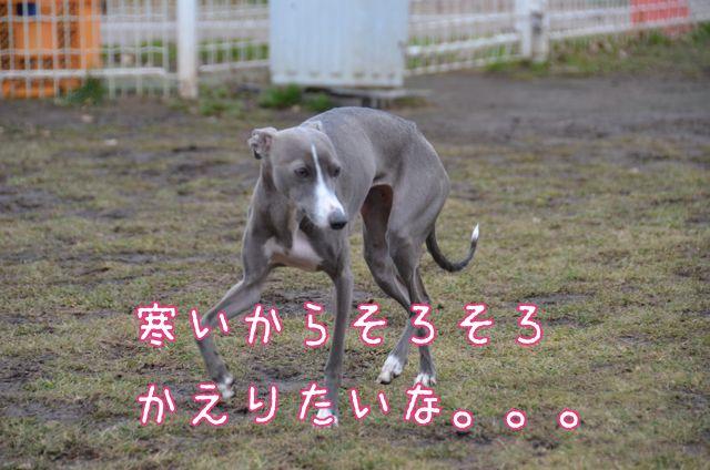 DSC_8072.jpg