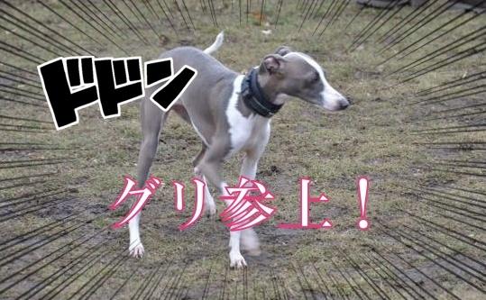 DSC_8075-2.jpg
