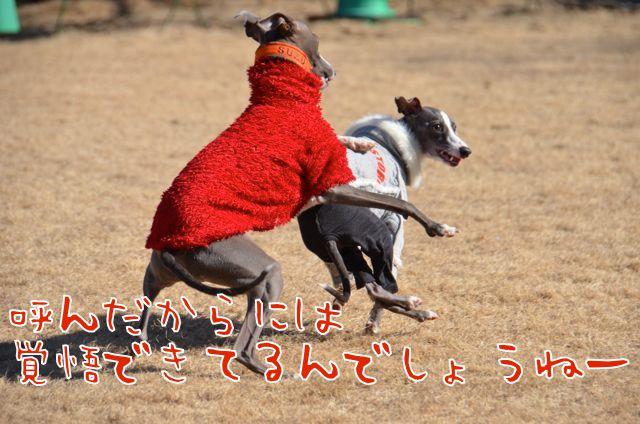 DSC_8580.jpg