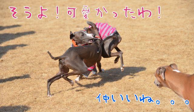 DSC_8680.jpg