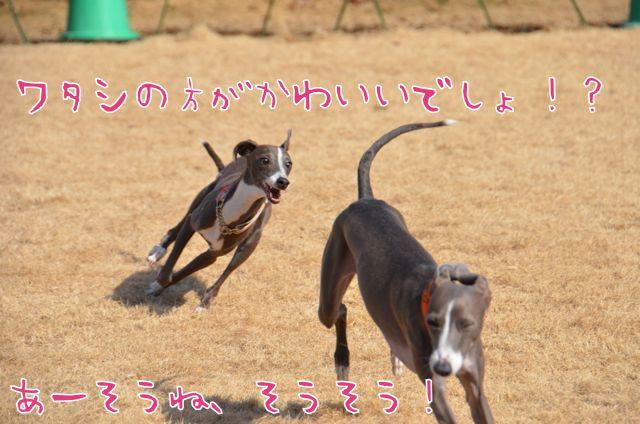 DSC_8684.jpg