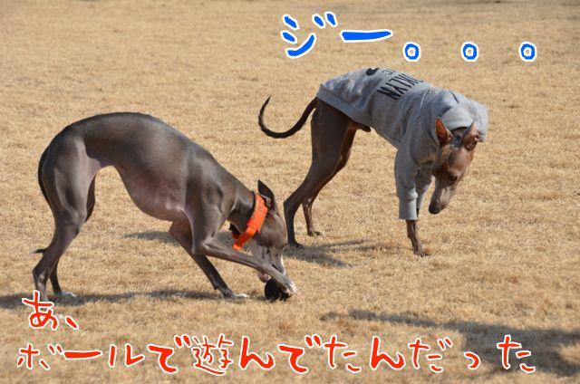 DSC_8834.jpg