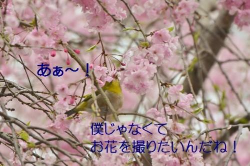 020_20150411175156c5e.jpg