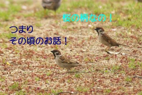 020_201505050222401d7.jpg