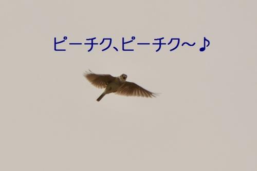 020_201507011822177ef.jpg