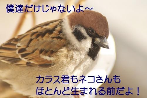 030_20150116221150ad6.jpg