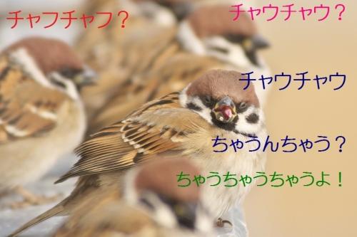 030_20150125214024e1b.jpg