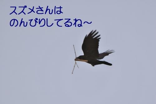 030_201502252117389fc.jpg