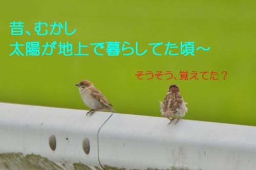 030_201507011822182d1.jpg