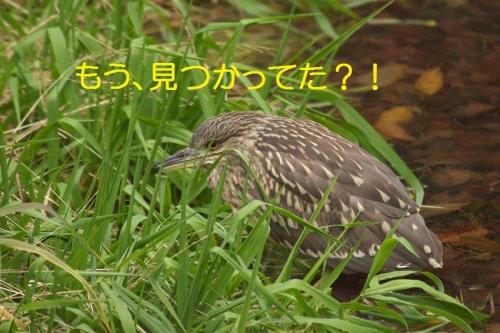 040_20150121213604bd0.jpg