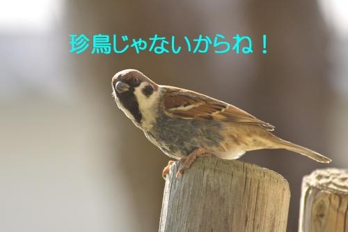 040_20150127204027a19.jpg