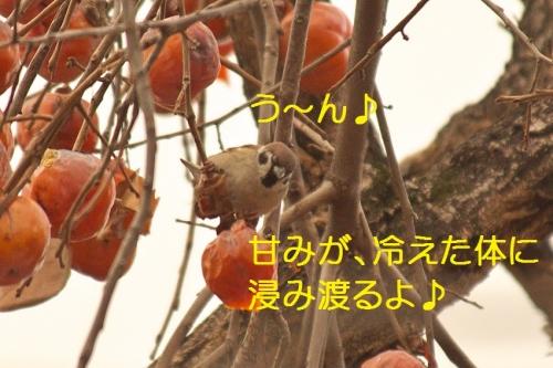 040_20150201193448709.jpg