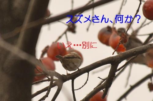 040_20150203204251ece.jpg