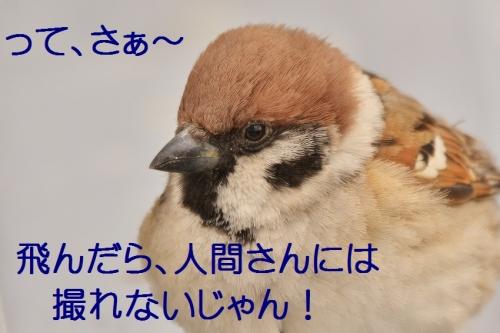 040_20150227212146384.jpg