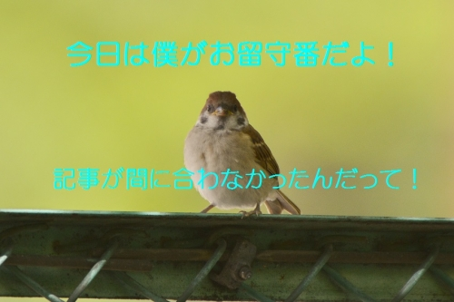 040_201506301937573ff.jpg