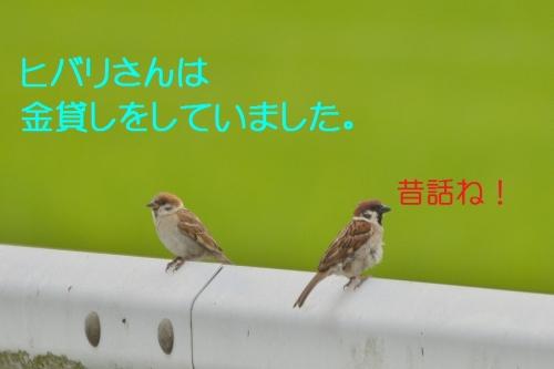 040_20150701182220079.jpg