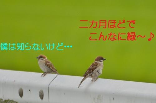 040_2015070218240572d.jpg
