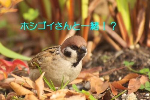 050_201501212136042ed.jpg