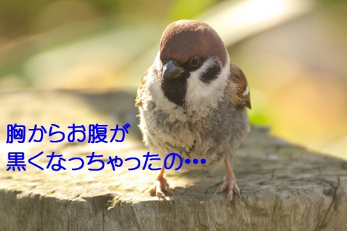 050_201501272040301ac.jpg