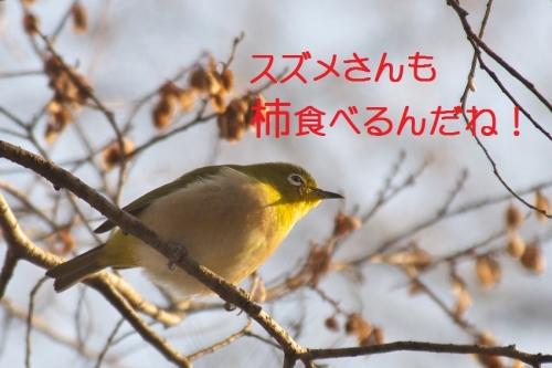 050_20150201193523c9f.jpg