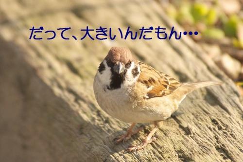 050_2015030822382992d.jpg